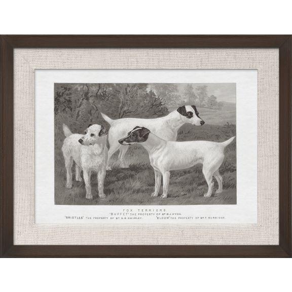 Cassell Dogs; Fox Terrier