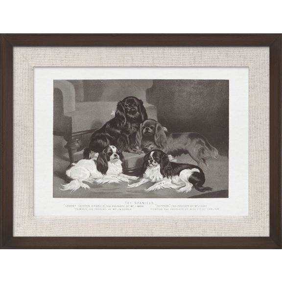 Cassell Dogs; Toy Spaniels