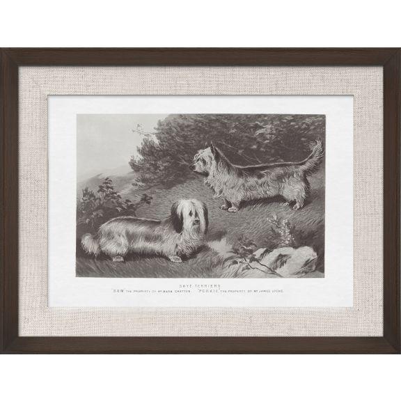 Cassell Dogs; Skye Terriers