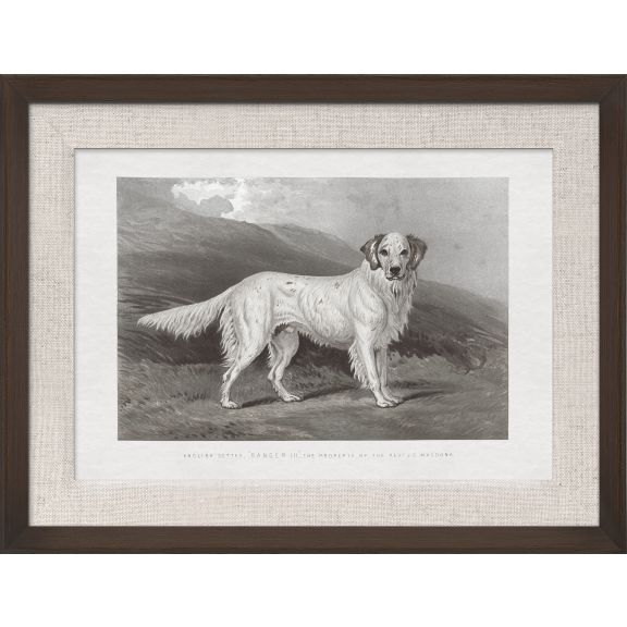 Cassell Dogs; English Setter