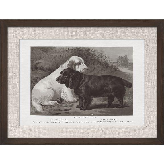 Cassell Dogs; Field Spaniels
