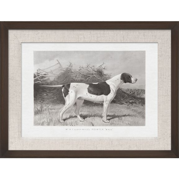 Cassell Dogs; Pointer