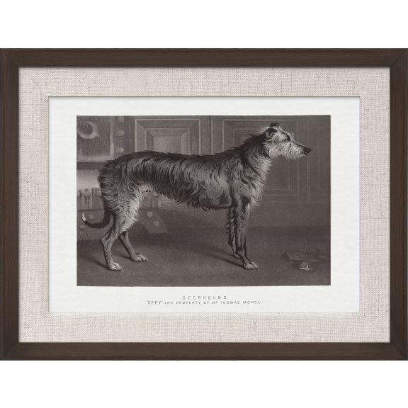 Cassell Dogs; Deerhound
