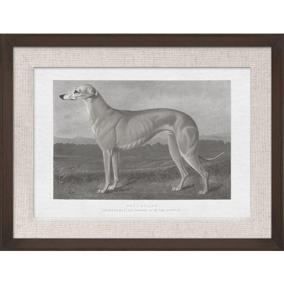 Cassell Dogs; Greyhound