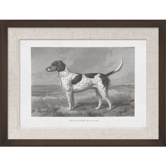 Cassell Dogs; Foxhound