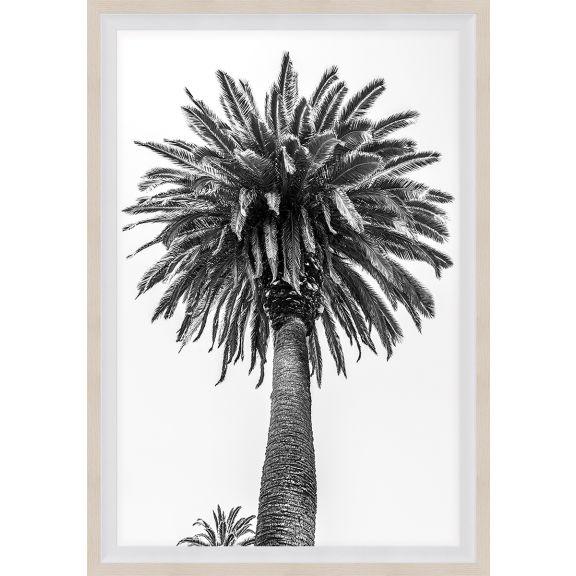 Chatsworth Palms 1