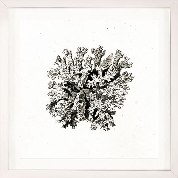Sea Corals No. 2