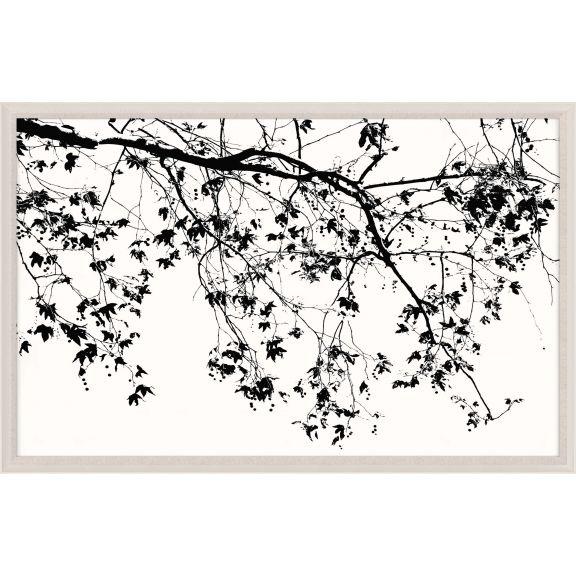 Elysian Tree Study