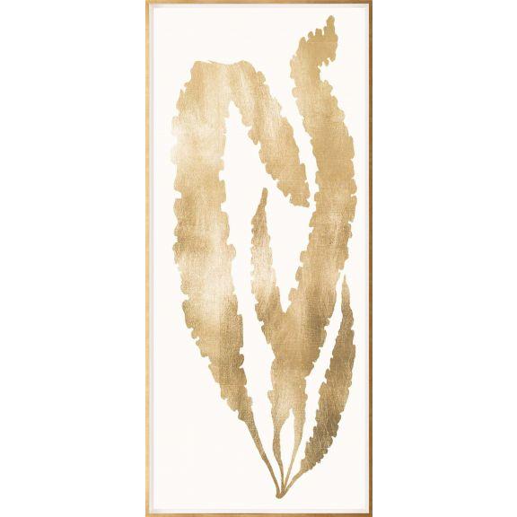 Gold Leaf Seaweed 3