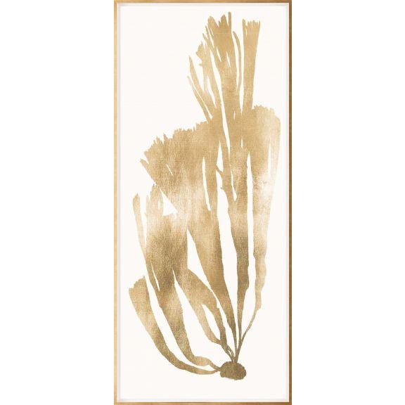 Gold Leaf Seaweed 4