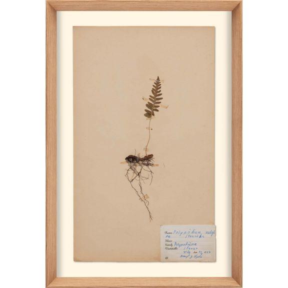 Herbarium, no.1