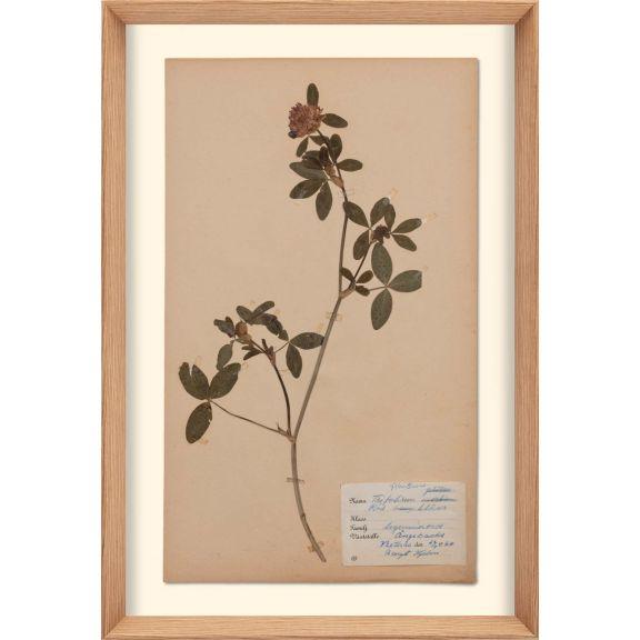 Herbarium, no.10