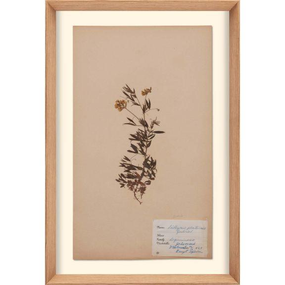 Herbarium, no.11