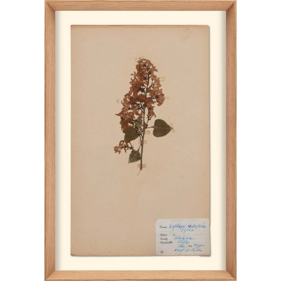 Herbarium, no.2