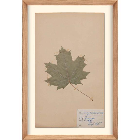 Herbarium, no.3