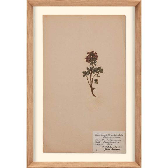 Herbarium, no.4