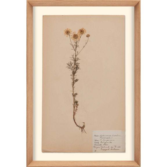 Herbarium, no.5