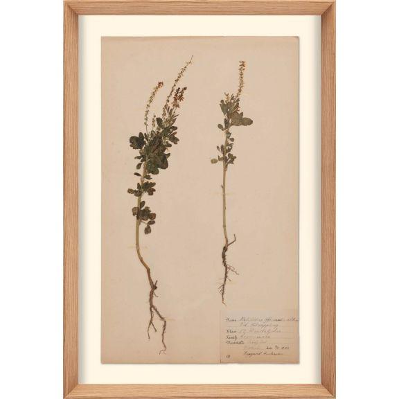 Herbarium, no.6