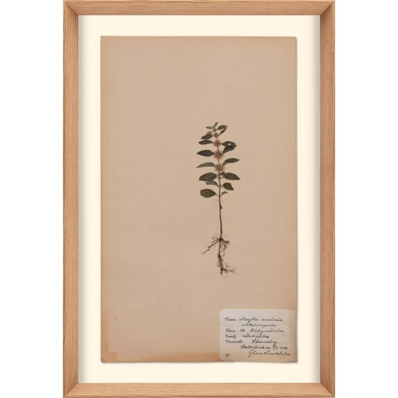 Herbarium, no.9