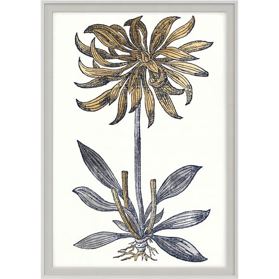 Historical Botanicals Series 2 No. 3