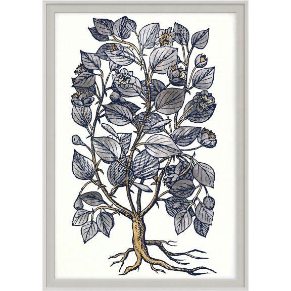 Historical Botanicals Series 2 No. 4