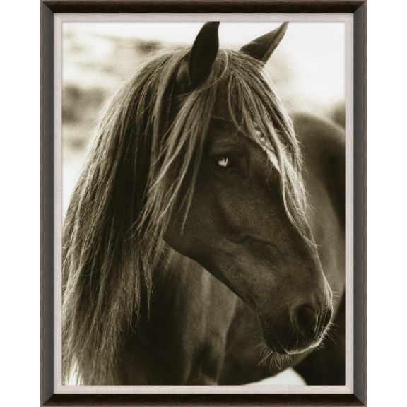 Hyden Horses: Pensive