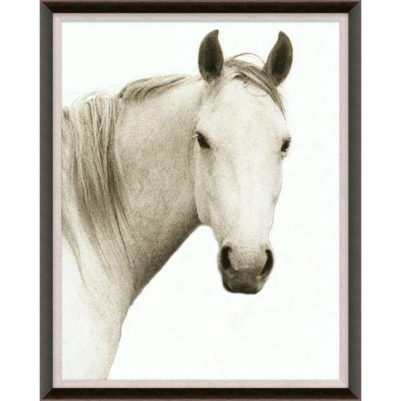 Hyden Horses: Solo
