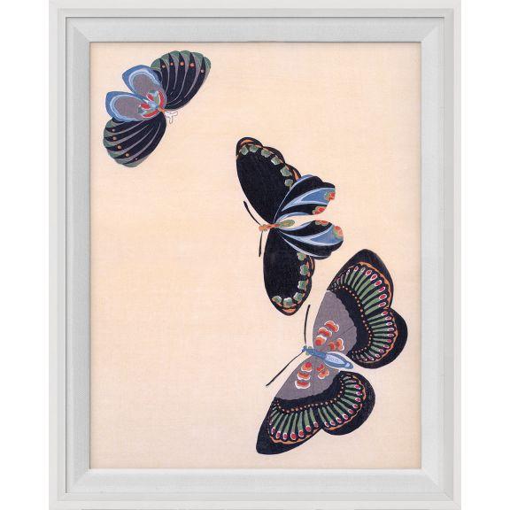 Kono Butterflies 22
