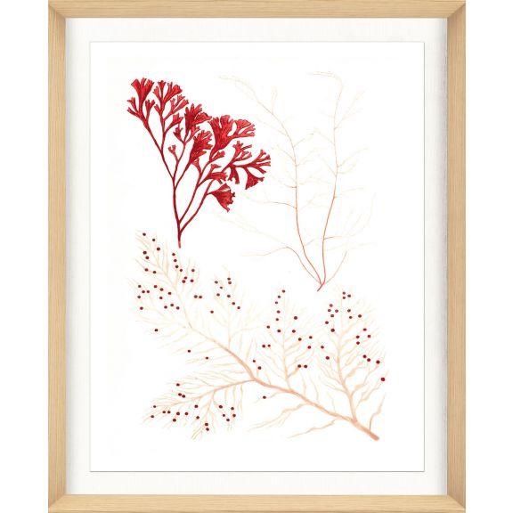 Migula Seaweeds No. 2