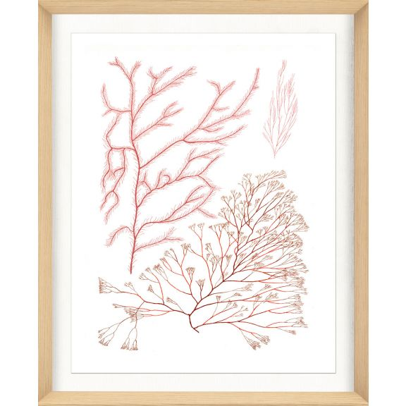 Migula Seaweeds No. 6
