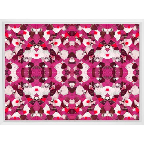 Morpho, Pink
