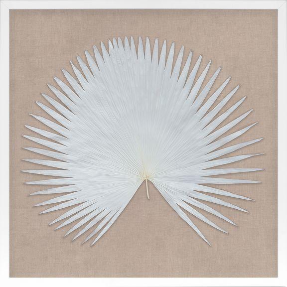Natural Fan Specimens in White