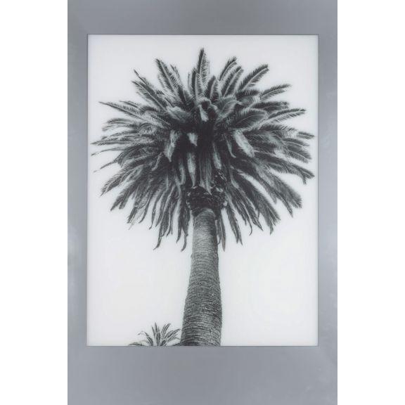 Aviation Frames: Palm 1