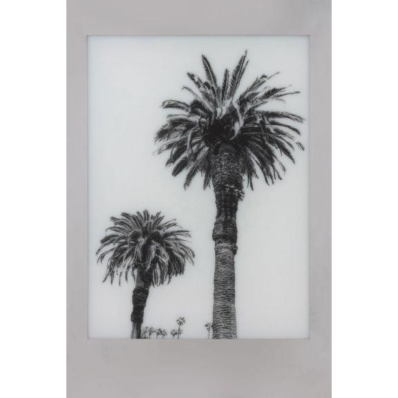 Aviation Frames: Palm 2