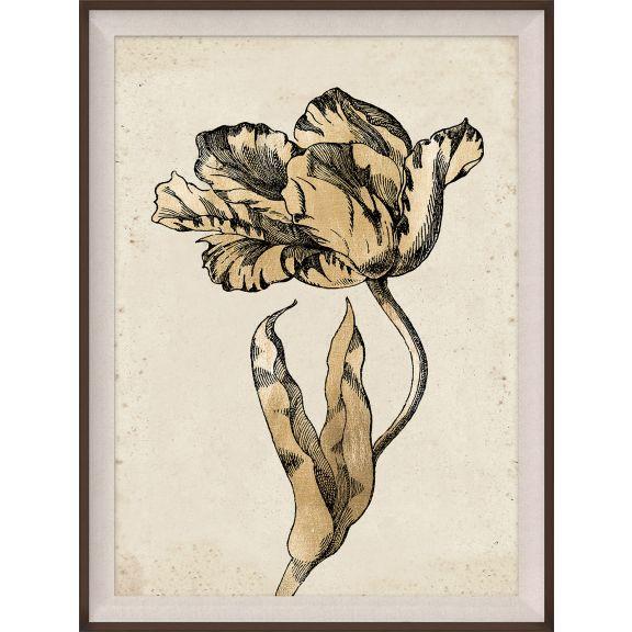 Sieger Tulips 1, Gold Leaf