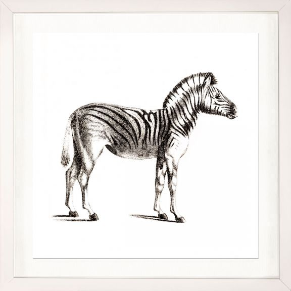 Young Animals: Zebra